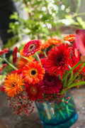 Gerbera winter 2017